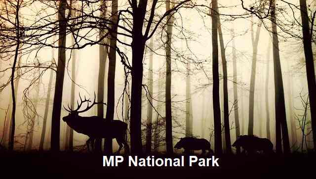 National Park in MP in Hindi
